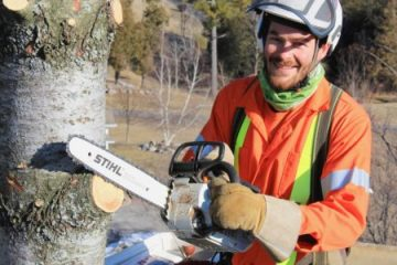 What You Should Know About Arborists